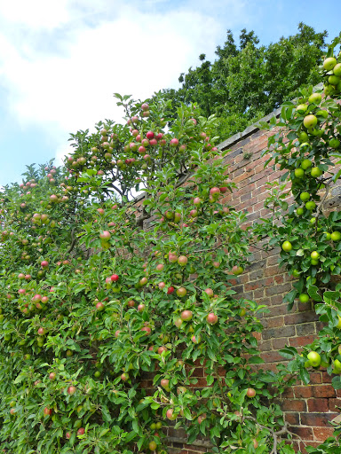 the apple tree essay It is remarkable how closely the history of the apple-tree is connected with that of  man the geologist tells us that the order of the rosaceœ, which includes the.